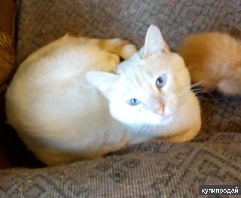 коты крысоловы