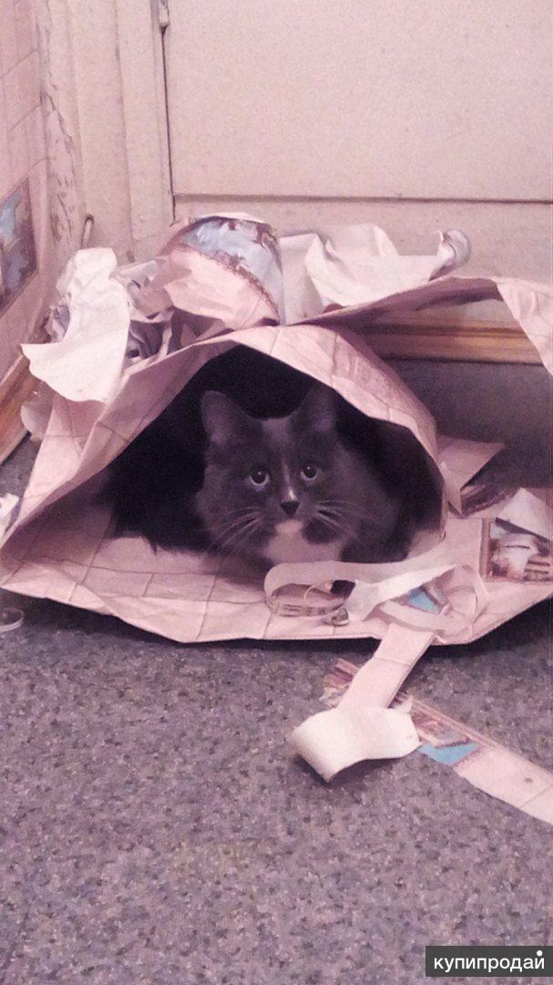 Котики ищут хозяев