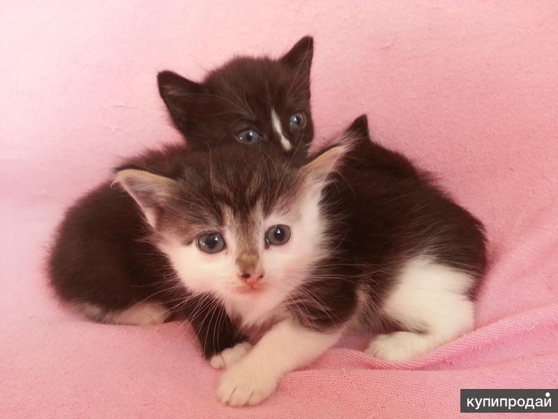 Подарю котёнка (возраст 1 и 4 месяца)
