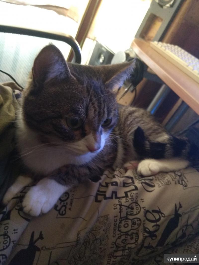 Отдам бесплатно кота, зовут Кузя, 2 года