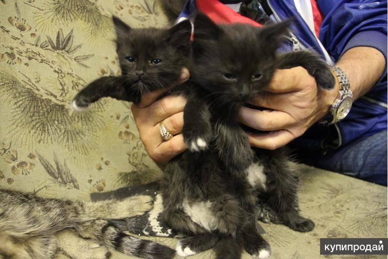 Чёрные котята ищут дом!