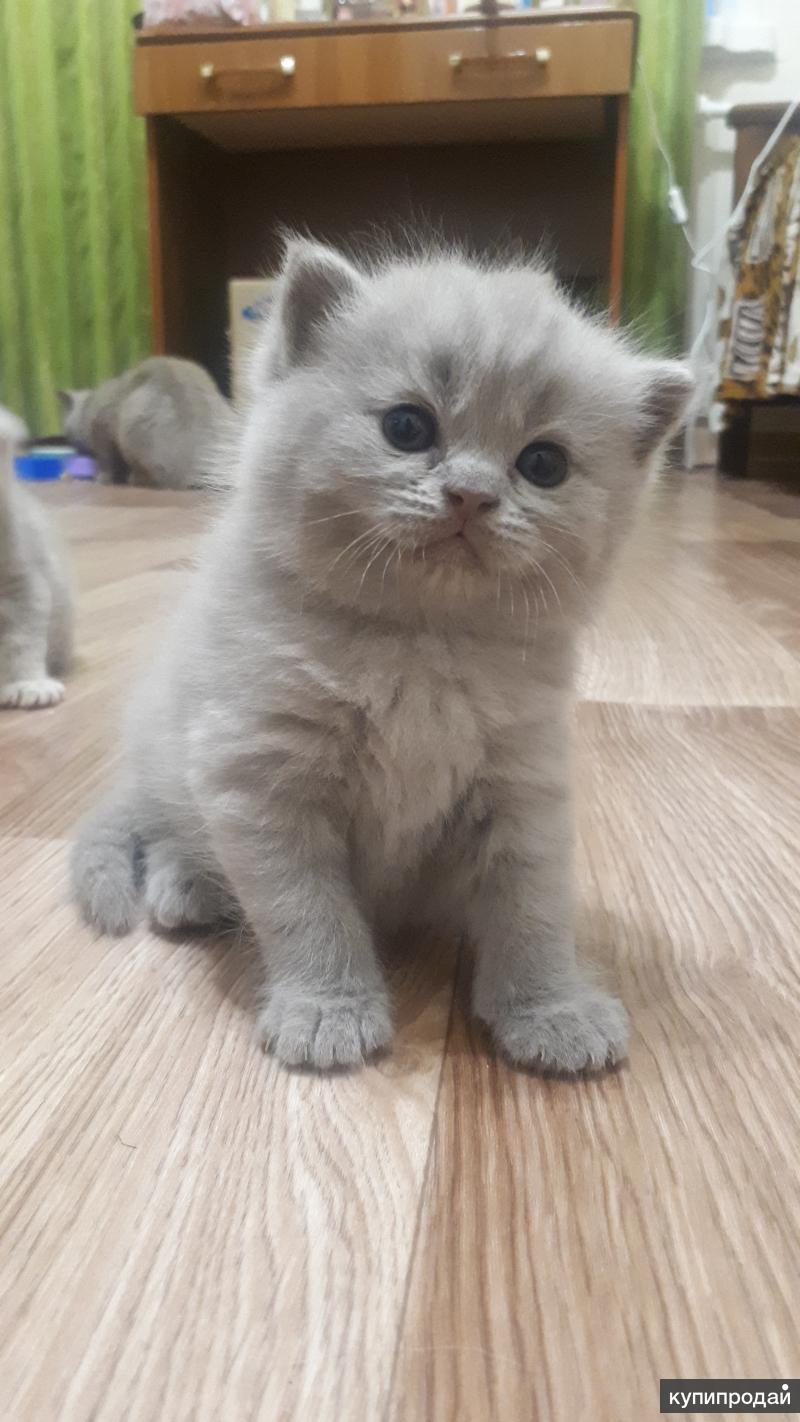 вообще, раз вислоухие коты по дням и неделям фото букеты
