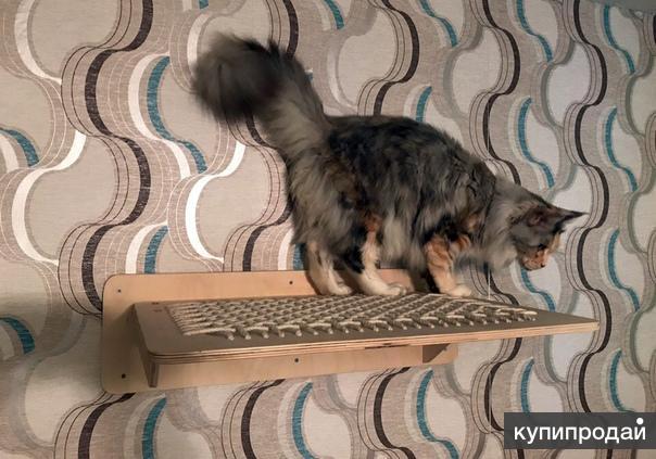 Оригинальный гамак для кошки