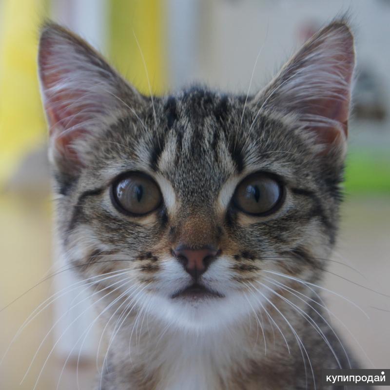 Котенок ищет нового хозяина!