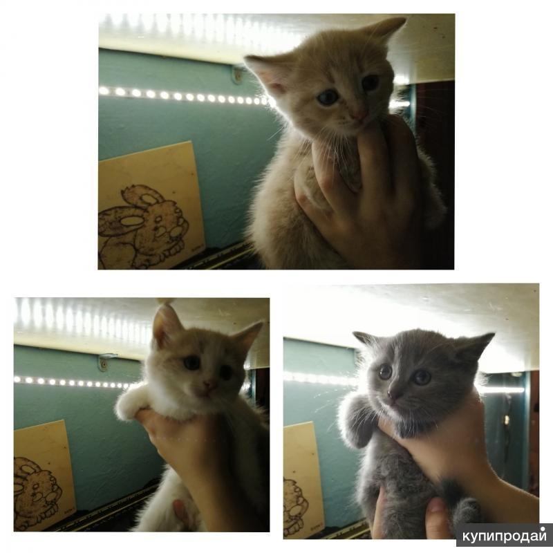 Котята в добрые руки :)