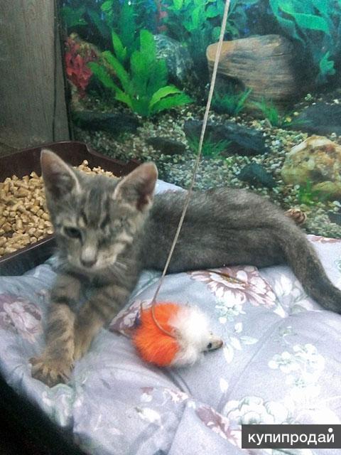 Маленькое чудо, особенный котенок Тимоша ищет дом и доброе сердце