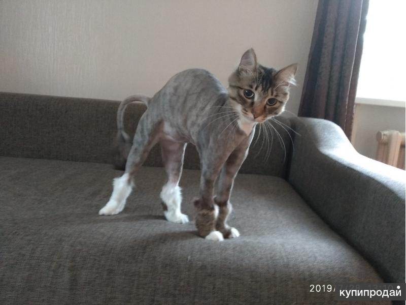 Стрижка кошек / груминг кошек