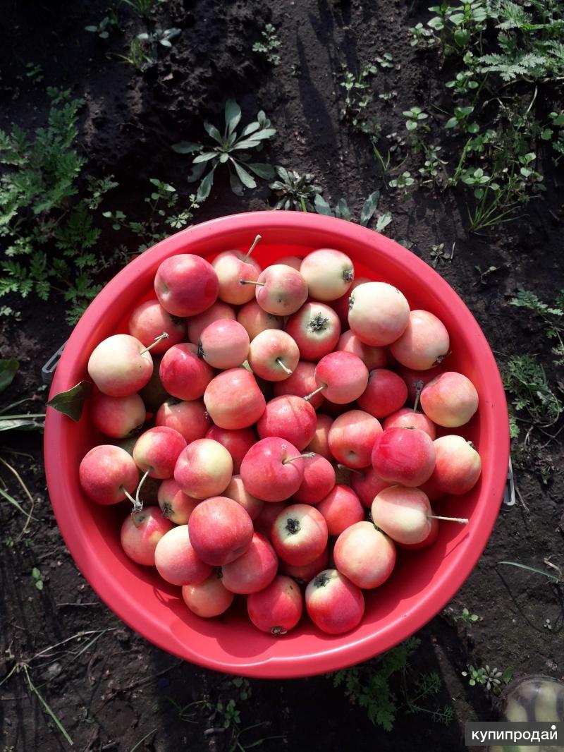 Продам фрукты со своего сада