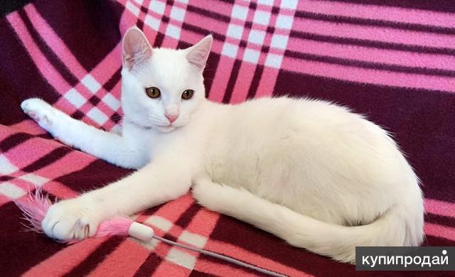 Альбус и Альбина, домашние котята-подростки в добрые руки