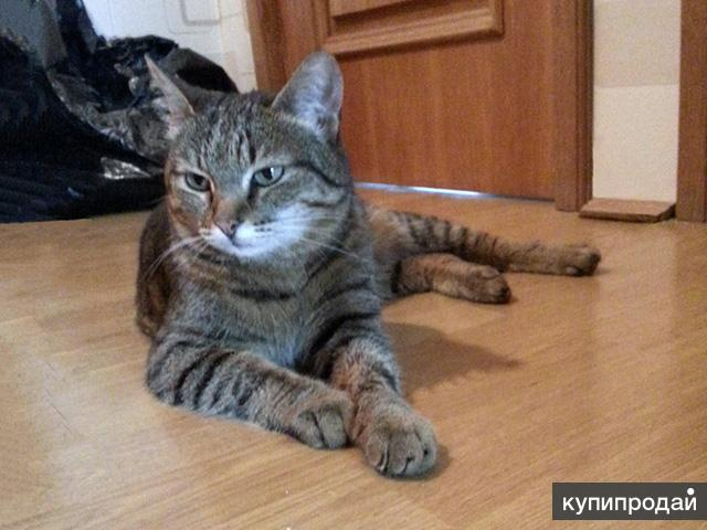 Ласкуша Ева, нежная домашняя молодая кошечка в добрые руки