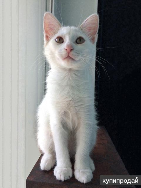 Замурчательный котенок Сильвер ищет замечательных хозяев