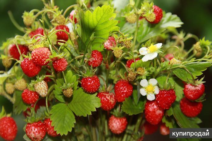 Чудо -сад.рф — саженцы, семена, товары для дачи