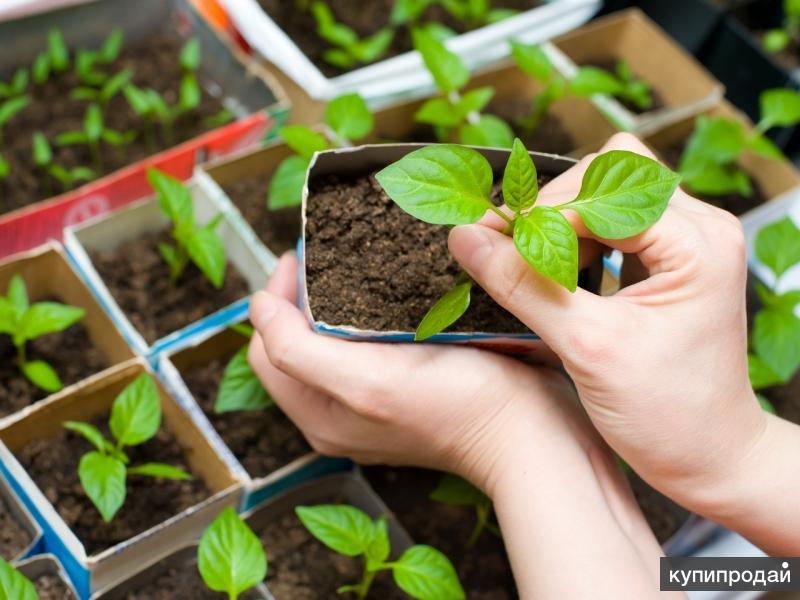 Чудо - сад.Новые семена по старым ценам! Сеем под зиму-экономим весеннее время!