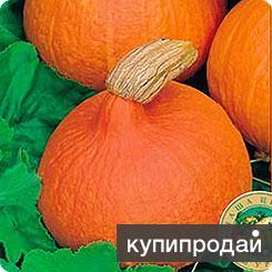 Продам семена Тыквы Вита каплевидной формы в им Чудо-сад