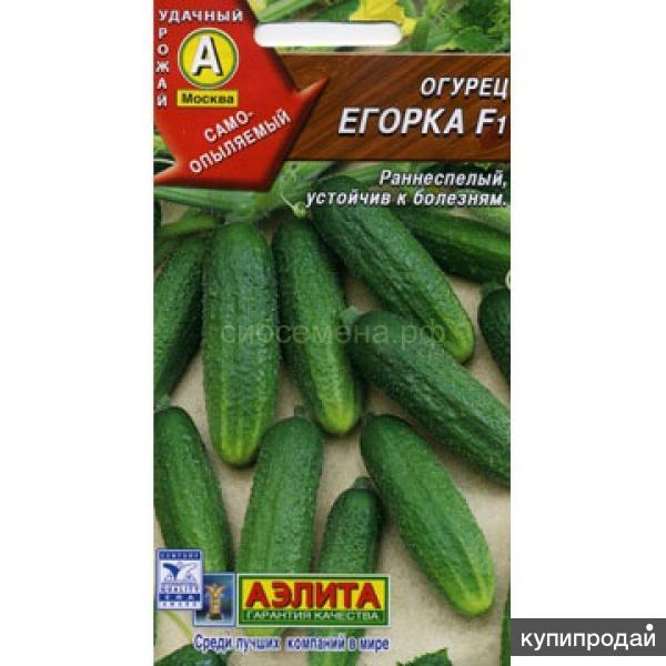 Продам семена-Огурец Егорка F1, стабильный,красивый,мелкобугорчатый