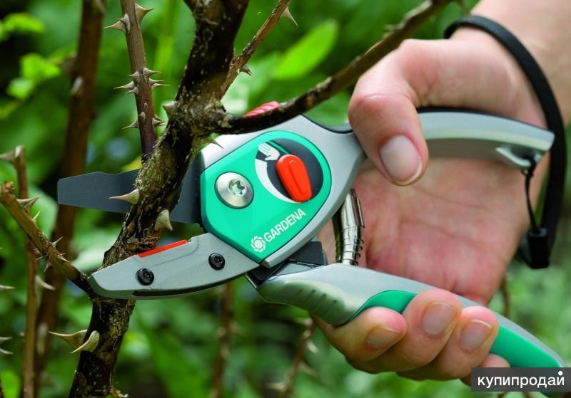 Услуги по профессиональной обрезке плодовых и декоративных деревьев.