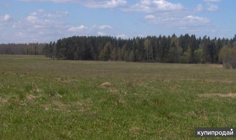 67 гектаров. Земля сельхозназначения. Владимирская область. Киржачский район