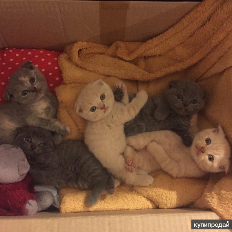 куплю котёнка в улан-удэ предрейсовых медицинских осмотров