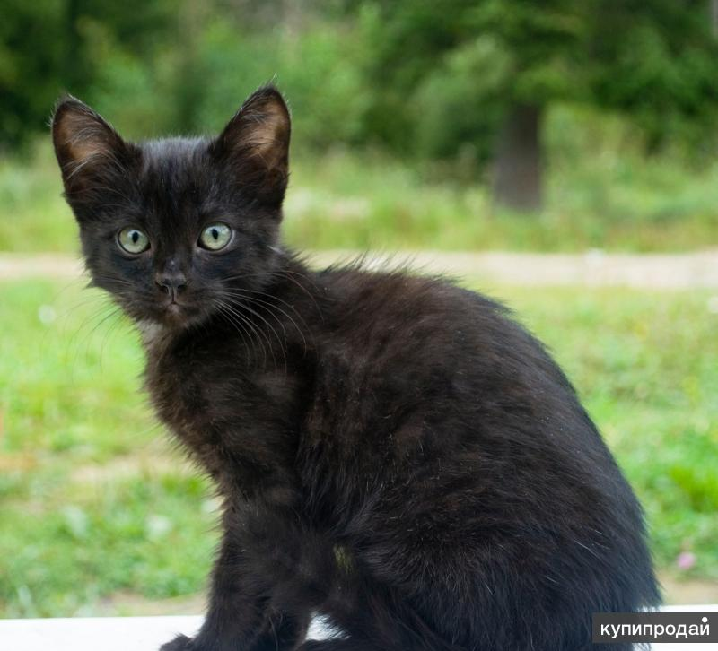 Черная кошечка снимет квартиру/дом