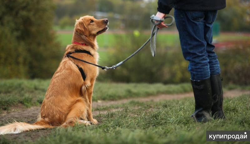 Дрессировка собак с выездом на дом Набережные Челны и Тукаевский район.