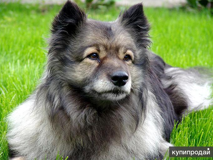 Дрессировка щенка в Альметьевске.