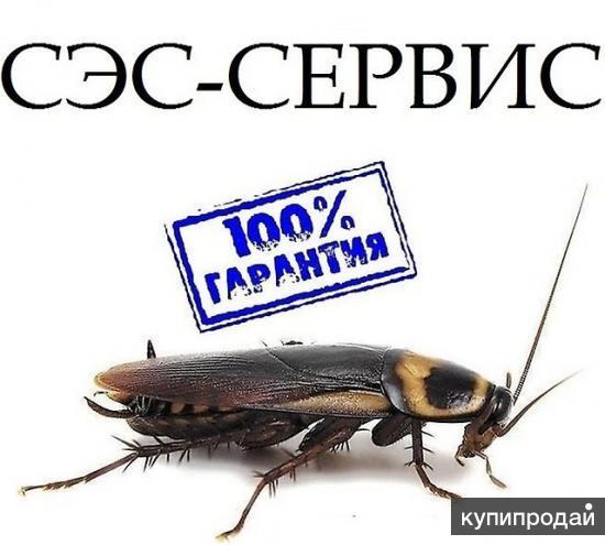 Травим насекомых, (тараканы, клопы и пр )