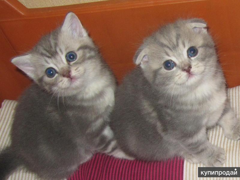 Отличные котики