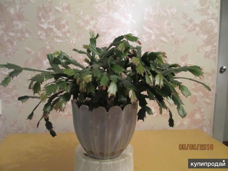 подставка под цветы, цветы комнатные.
