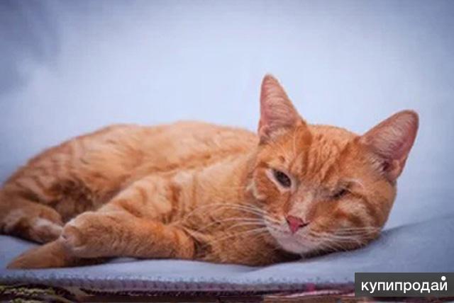 Добрейший солнечный молодой котик Рыжик ищет дом