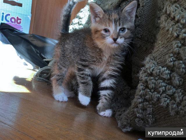 Крошка-Картошка, чудесный домашний котенок в добрые руки