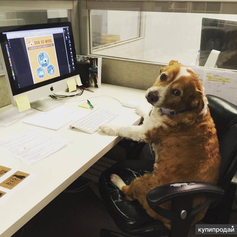Сотрудник в офис