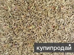 Овсяница семена