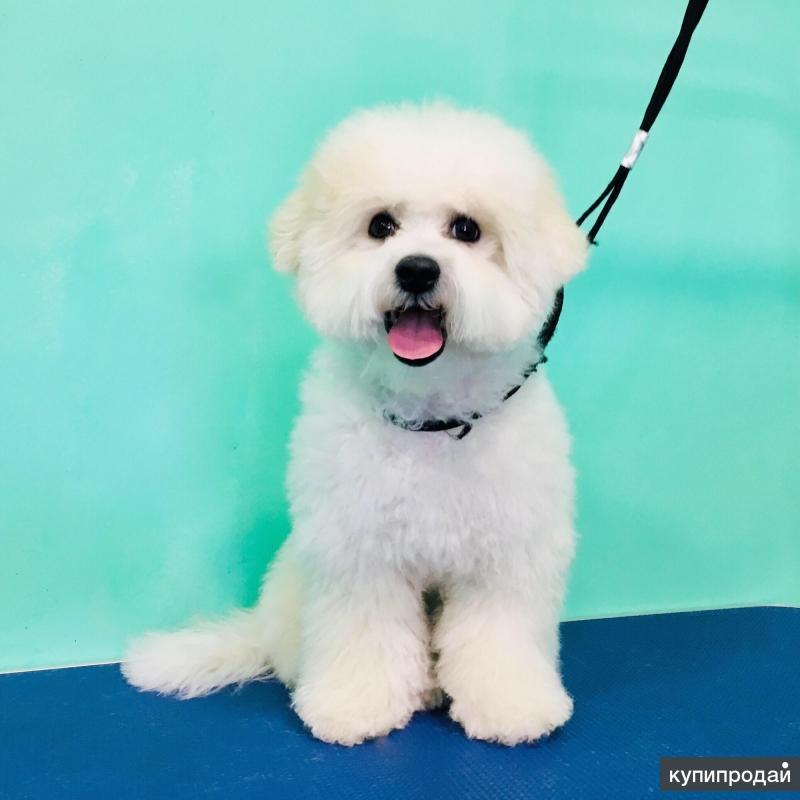 Груминг собак (стрижка, мытьё)