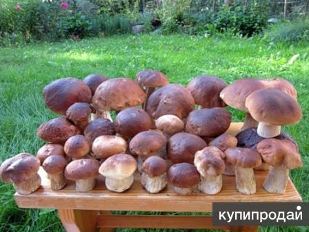 Свежие белые грибы, черника, земляника с доставкой
