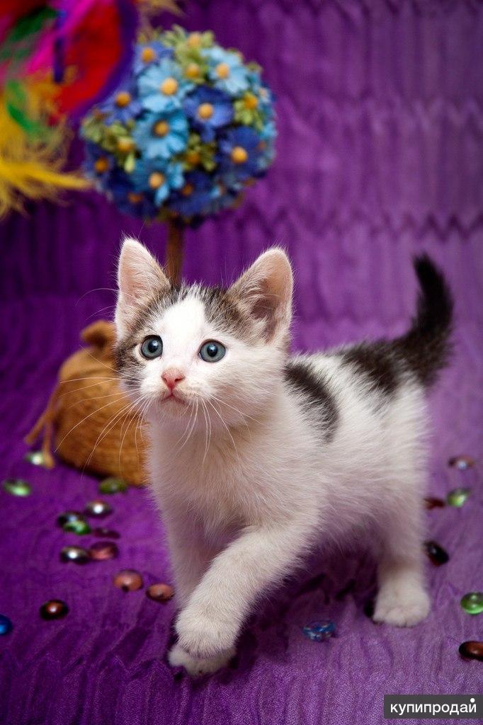 Маленький котёнок Тоша ищет дом