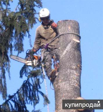 Спилить, удалить, обрезать деревья в Черноголовке