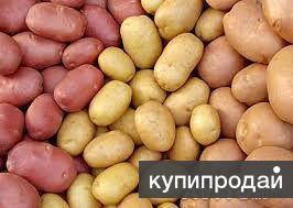 Картофель от производителя!