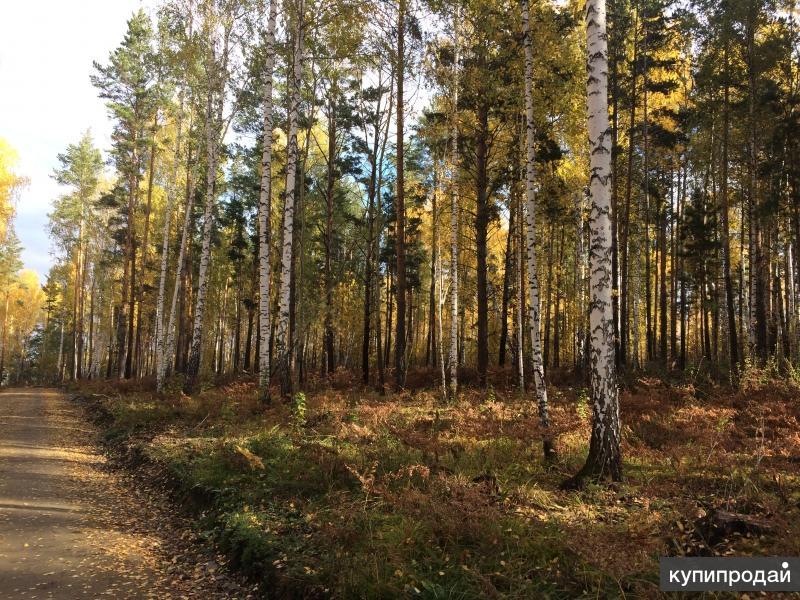 Продам земельный участок в лесу