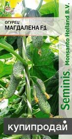 Продам семена-Огурец Магдалена F1 8шт -новейший, ранний, зеленцы ровные