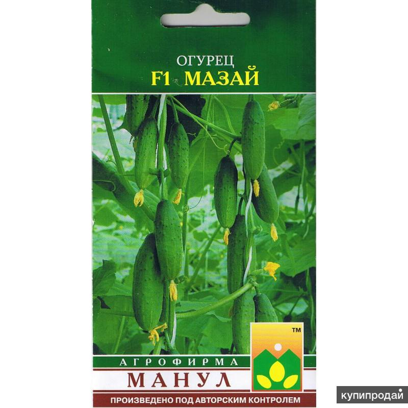 Продам семена-Огурец Мазай F1,очень скороспелый,для пленочных теплиц