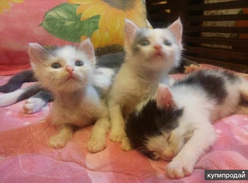 Котята в заботливые руки!