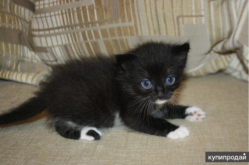 Отдам котёнка девочку