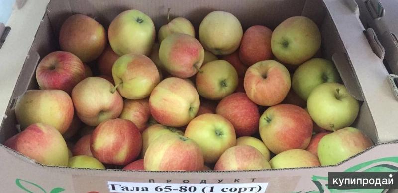 яблоки оптом краснодарский край включает комплекты