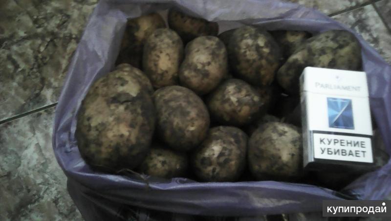 Картофель пай рецепт с фото в домашних пожалуй