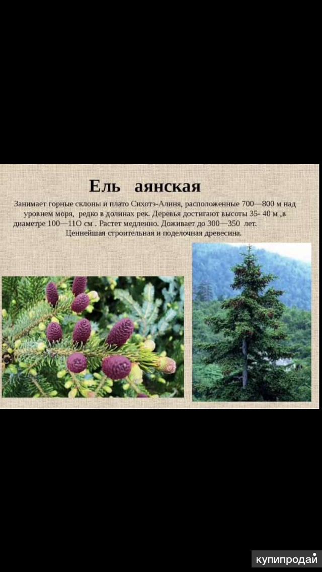 Продажа кустарников и деревьев
