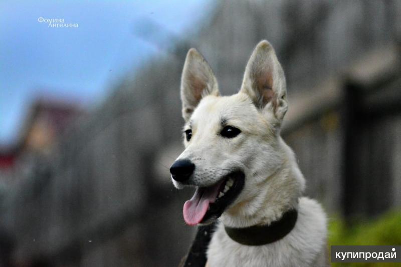 Очень хорошая собака(10 мес)