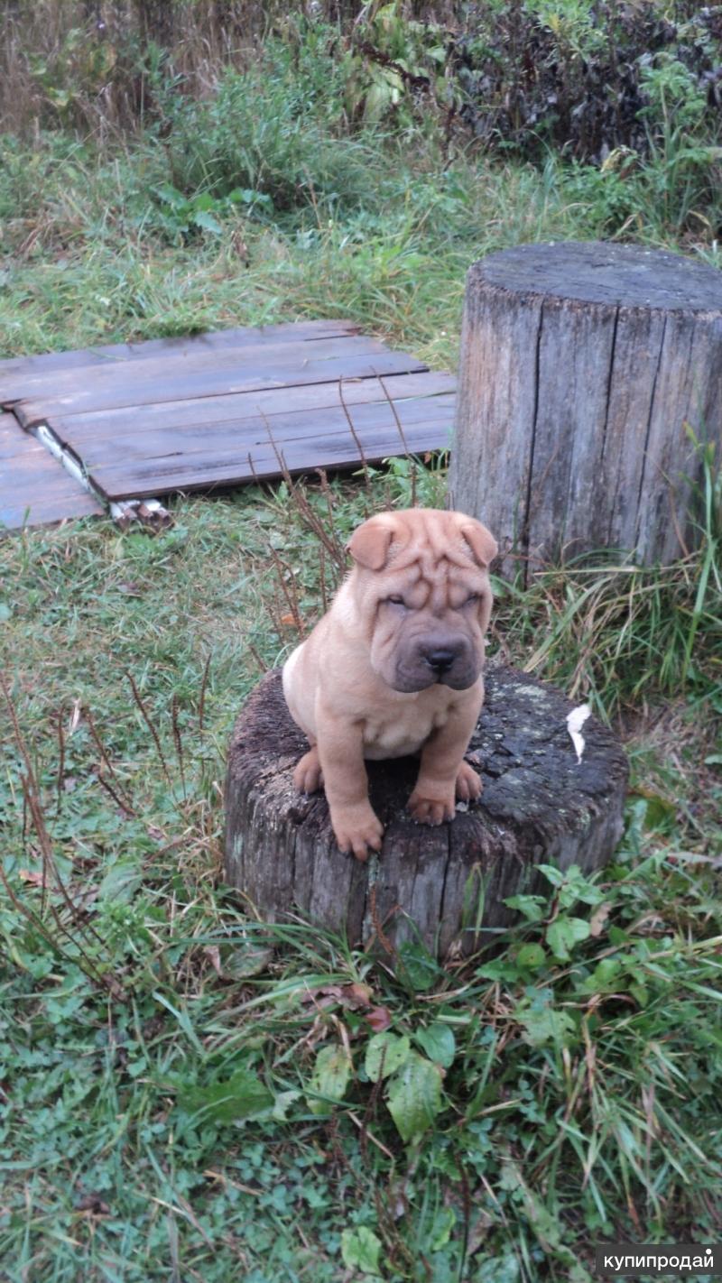 продается щенок
