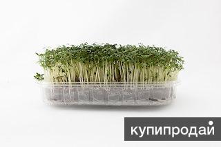 Свежая, пророщенная зелень в Екатеринбурге.