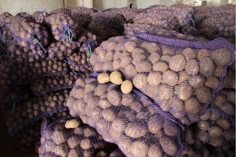 Продовольственный Картофель большими объемами от КФХ