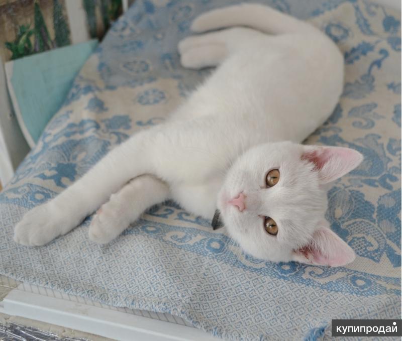Белый котик ищет хозяина